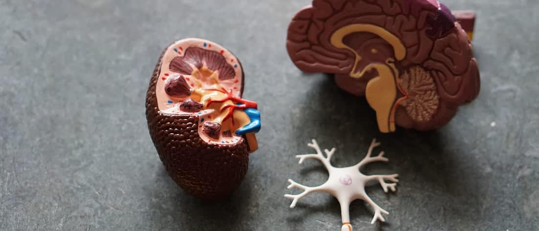 Lernen und Gehirn
